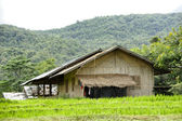 Rice Field and House in Chiangmai, Thailand — Zdjęcie stockowe