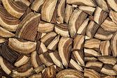Cross section wood — Stock Photo