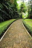 Walkway at garden — Stok fotoğraf