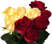 Beautiful red and yellow roses — Stock Photo