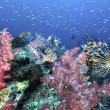 Beautiful colorful soft coral with lionfish, Similan, Thailand. - Stock Photo