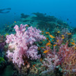 Soft coral with diver, Thailand. — Stock Photo