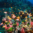 Beautiful Coral Reef and Colorful Fish — Foto de Stock