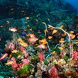 Beautiful Coral Reef and Colorful Fish — 图库照片