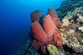 Stove-pipe Sponge — Stock Photo