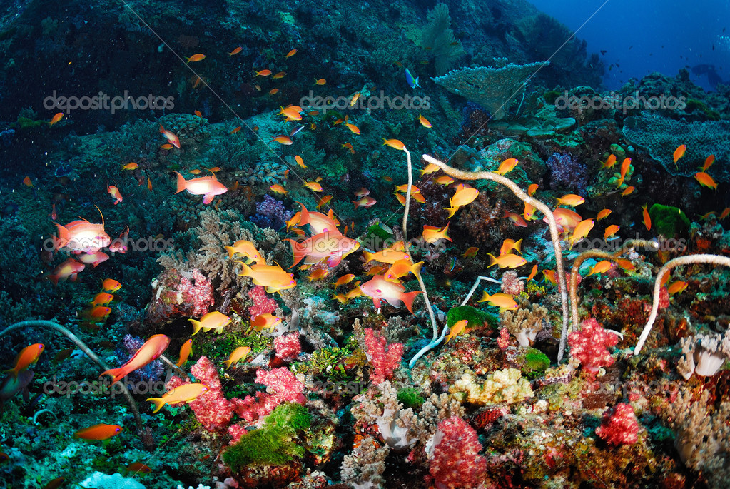 Beautiful Colorful Coral Reefs And Fish Beautiful Colorful Cor...