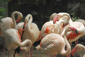 Group of white flamingos in the park by morning. — Stock Photo