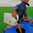Farmer mixing pesticide on the rice field — Stock Photo