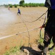 Stock Photo: Farmer spray pesticide on rice field