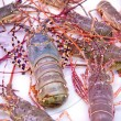 Thai lobster, seafood, market, thailand — Stock Photo #25375015