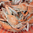 Stock Photo: Crabs boiled and ready to eat.