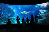 Tourist in big aquarium, Bangkok, Thailand. — Stock Photo