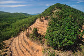 Rain forest destruction in thailand form Aerial view — Stock Photo