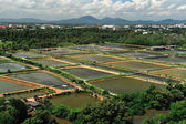 The Shrimp farming in thailand from aerial view. — Stock Photo