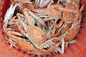Krabi vařené a připravené k jídlu. — Stock fotografie