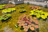 中国様式の噴水と睡蓮 chi 内のプール林 — ストック写真