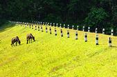 Two horses at Pang Ung Forestry Plantations, Maehongson Province — Stock Photo