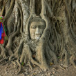 Wat Mahathat Buddha head in tree, Ayutthaya - Stock Photo
