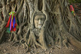 Wat Mahathat Buddha head in tree, Ayutthaya — Stock Photo