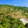 Rain forest destruction in northen of thailand — Stock Photo