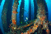 School of fish underwater near oil rig — Stock Photo