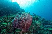 Soft coral colony , Similan island Thailand — Stock Photo