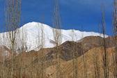 美丽的雪山山脉和高大的白杨树树 leh 市, — 图库照片
