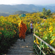MAEHONGSON, THAILAND- NOVEMBER 22: unknown monk walking in Tung — Stock Photo #38375415