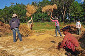 MAEHONGSON, THAILAND- NOVEMBER 20: An unidentified farmers isthr — Stock Photo