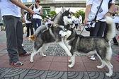 BANGKOK, THAILAND APRIL 9:Organized rally protect of dog eating — Photo