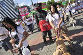 BANGKOK, THAILAND APRIL 9:Organized rally protect of dog eating — Stock Photo