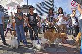 Banguecoque, Tailândia, 9 de abril: rali organizado proteger de cachorro comendo — Fotografia Stock
