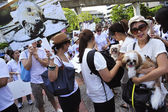 BANGKOK, THAILAND APRIL 9:Organized rally protect of dog eating — Stock Photo