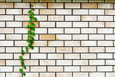 Plant on the wall — Stockfoto