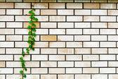 завод на стене — Стоковое фото