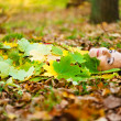 Girl lying on the ground — Foto Stock