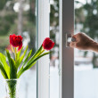 Window with tulips - Foto Stock