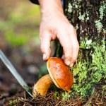 Man cuts a mushroom — Stock Photo #32257155