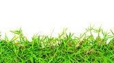 Fresh Spring Green Grass Isolated On White Background. — Stock Photo