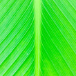 Texture of a green leaf. — Stock Photo