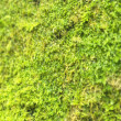 Moss on a trunk of a tree. - 