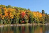 árvores, refletindo no lago calmo — Fotografia Stock