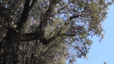 Via Crucis in Cortona, Italy — Stock Video