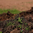 Stock Video: Compost