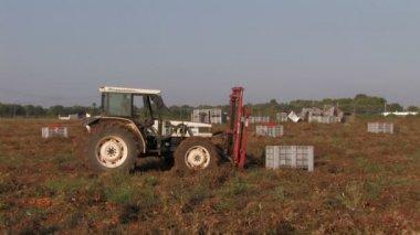 トマトの木枠を持ち上げるトラクター — ストックビデオ