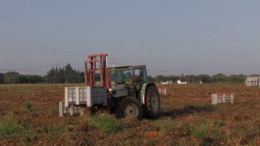 Tractor moving crates of tomatoes — Stockvideo