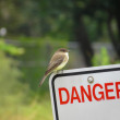Bird sitting on danger sign — Foto Stock