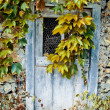 Old wooden door that has been overgrown by foliage — Stock Photo