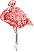 American flamingo with its head curled. — Stock Vector