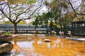 Flamingos in the lake — Stock Photo